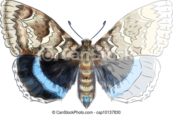 Butterfly Catocala Fraxini. Unfinished Watercolor drawing imitation. Vector illustration. - csp10137830