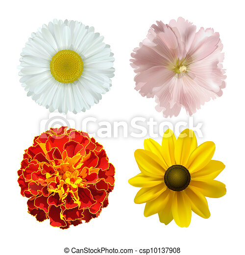 Summer flowers - csp10137908