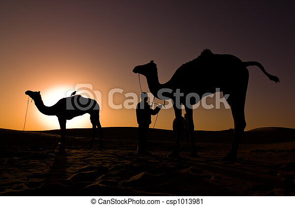 Camel silhouettes at sunrise - csp1013981