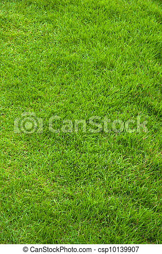 fresh spring green grass  - csp10139907