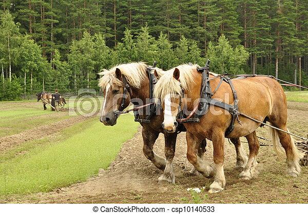壁纸 动物 马 牛 骑马 450_318