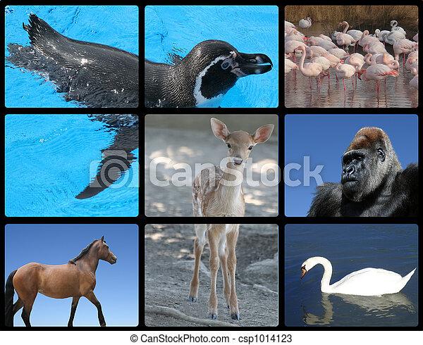 kellemes, állatok, madarak - csp1014123