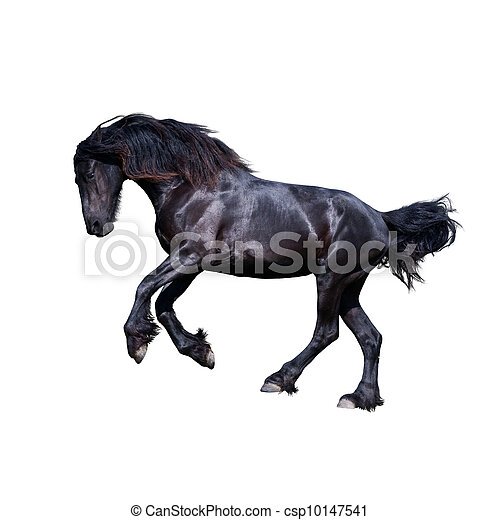 Black friesian stallion gallop - csp10147541