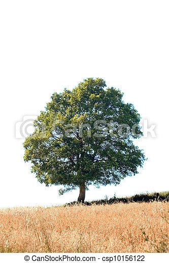 Oak Tree Cutout - csp10156122