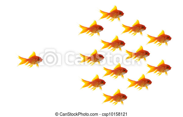 goldfish follower on white background, unique and diffrent business concept - csp10158121