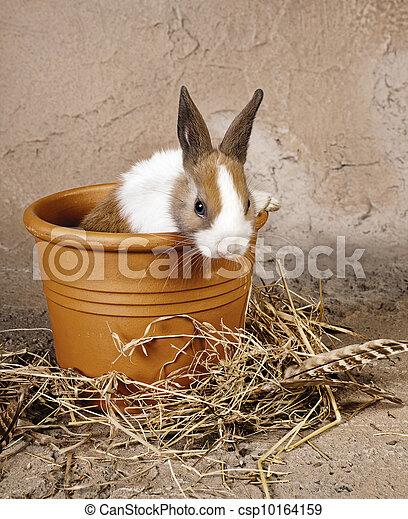 Furry rabbit in rustic flowerpot - csp10164159
