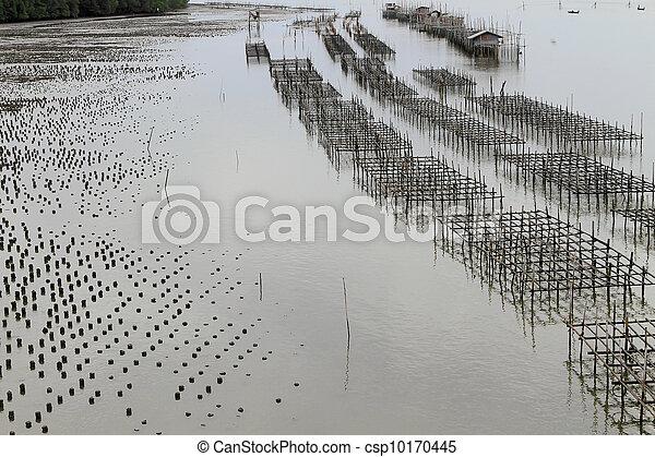 Shellfish farm, Thailand   - csp10170445