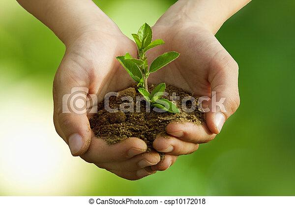 男孩, 保護, 樹, 种植, 環境 - csp10172018