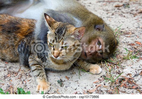 Archivi immagini di scimmia gatto scimmia e domestico for Piani di fienile domestico
