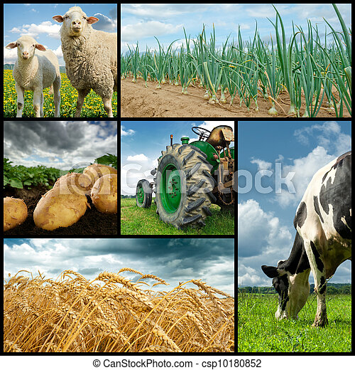 Collage, landwirtschaft - csp10180852