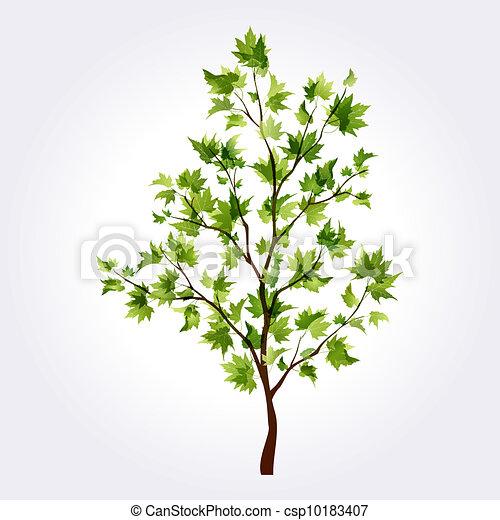 Maple Tree Drawing Summer Tree Maple
