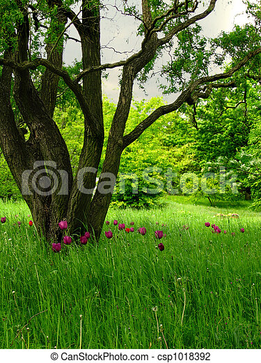 Ecological meadow - csp1018392