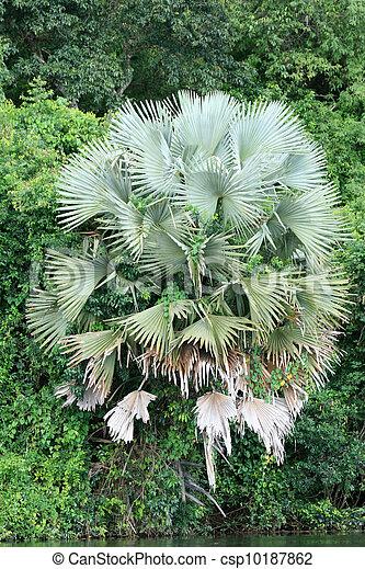 Vegetation - Murchison Falls NP, Uganda, Africa - csp10187862