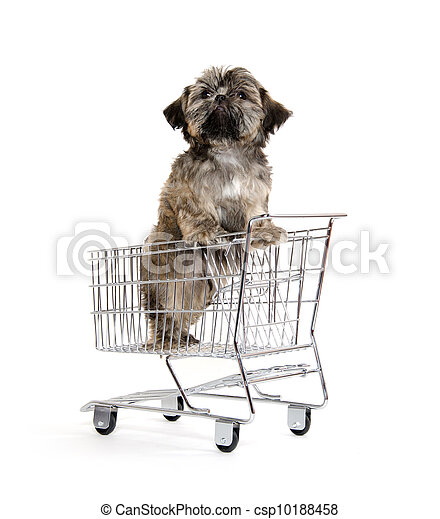 shih tzu puppy in shopping card - csp10188458