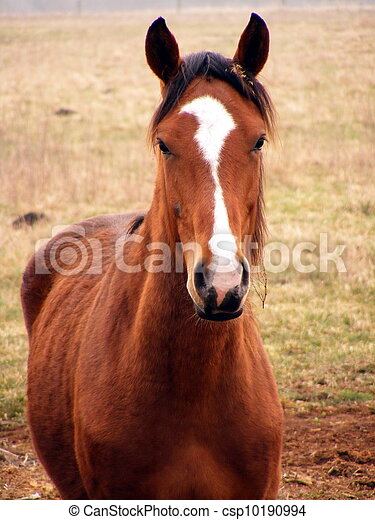 Young colt portrait - csp10190994