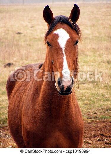 Young colt portrait - csp10190994