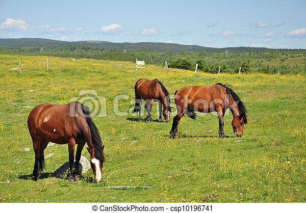 horses in pasture - csp10196741