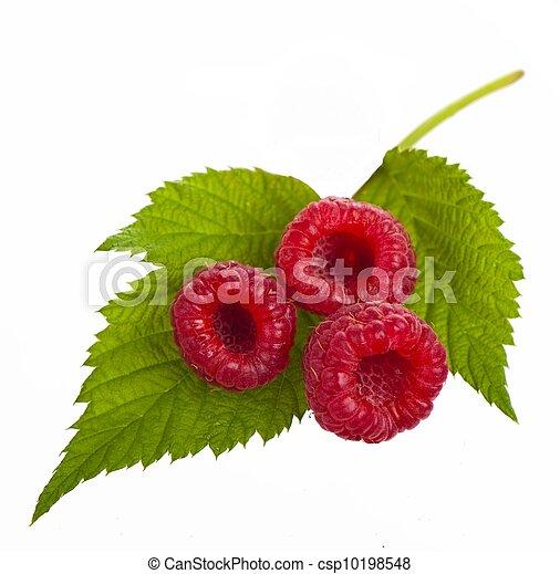 木莓, 对象, 白色, 背景