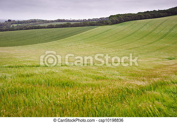 Landscape across agricultural fields on windy Summer day - csp10198836