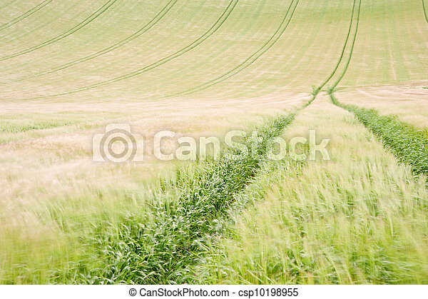 Landscape across agricultural fields on windy Summer day - csp10198955