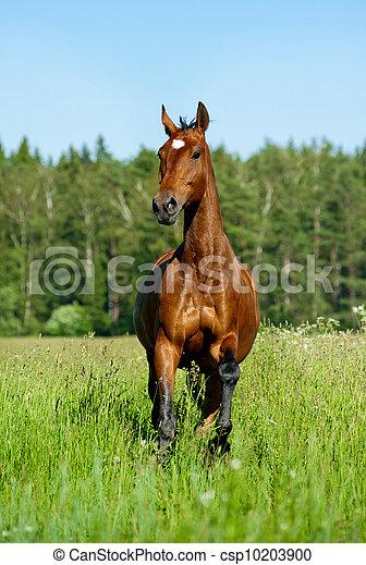 purebred horse - csp10203900