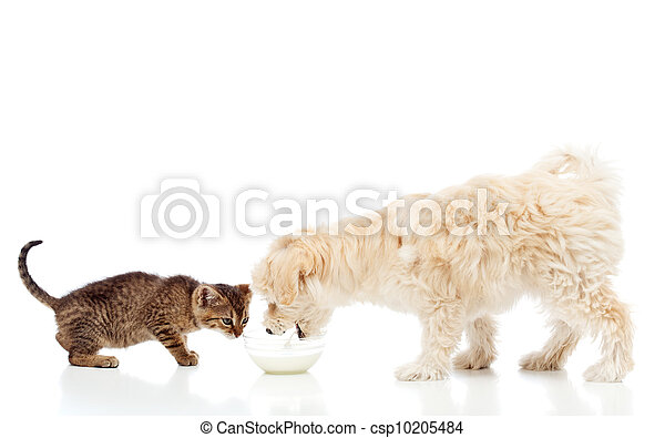 Buddies at the feeding bowl - dog and cat eating - csp10205484
