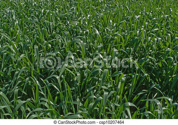 agriculture - csp10207464