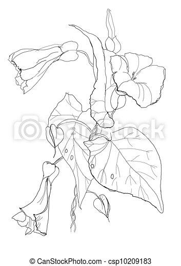 witte achtergrond tekening bloemen - photo #27