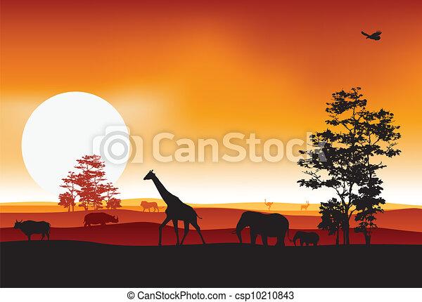 silhouettte of animal wildlife - csp10210843