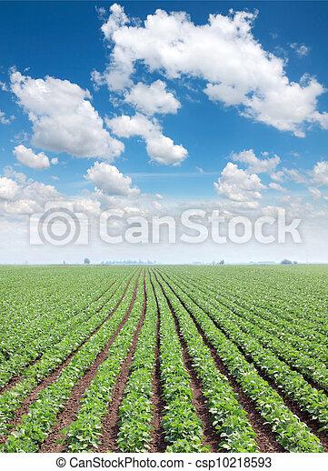 Agriculture - csp10218593