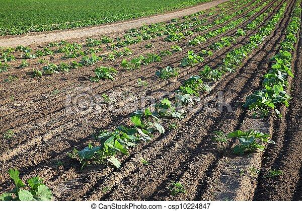Agriculture - csp10224847