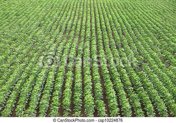 Agriculture - csp10224876