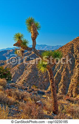 Joshua Tree Landscape - csp10230185