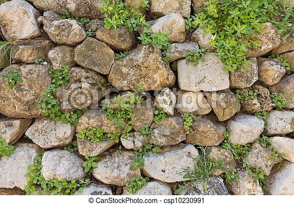 van textuur, oud, steen, muur, groene, planten - textuur, oud ...