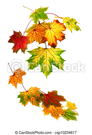 Colorful autumn leaves falling down - csp10234617