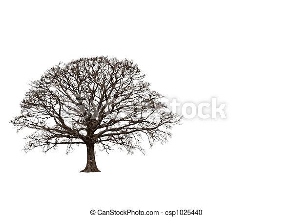 Abstract Winter Oak - csp1025440