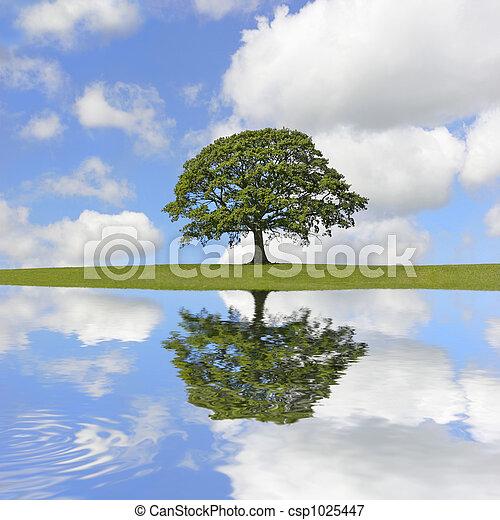carvalho, árvore, beleza - csp1025447