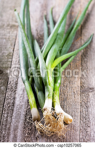 green onion - csp10257065