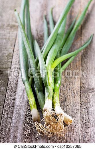 green onion - csp10257065