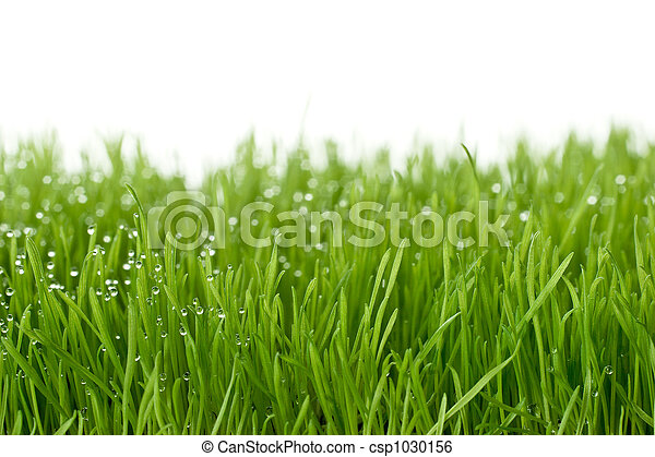 fresh green gras  - csp1030156