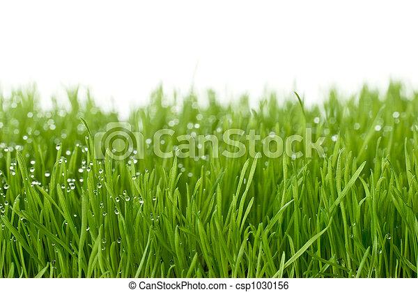 fresh green gras - csp1030156
