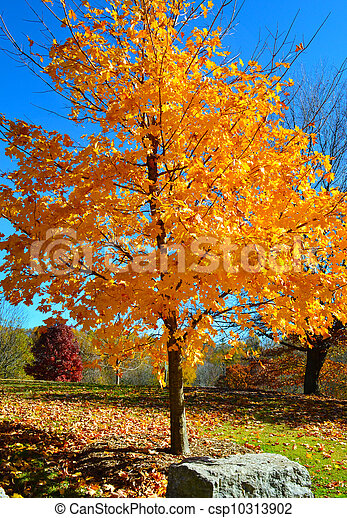 Yellow fall tree during autumn - csp10313902