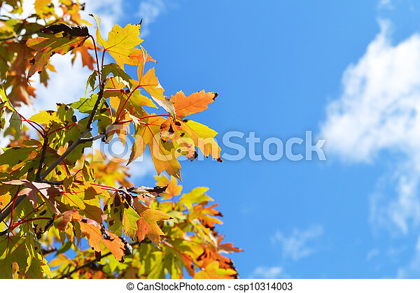 Fall leaves against blue sky - csp10314003