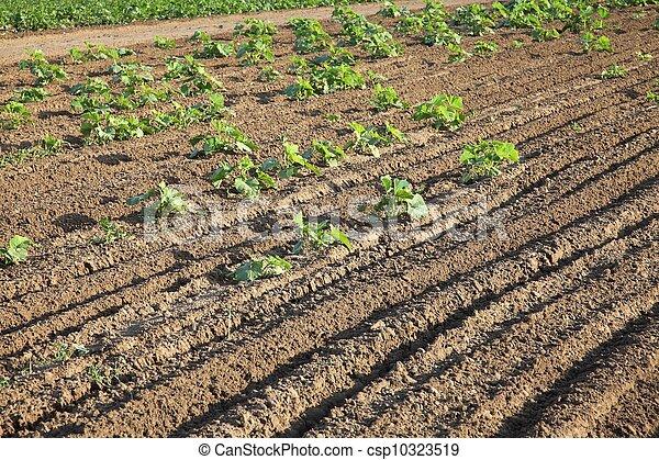 Agriculture - csp10323519