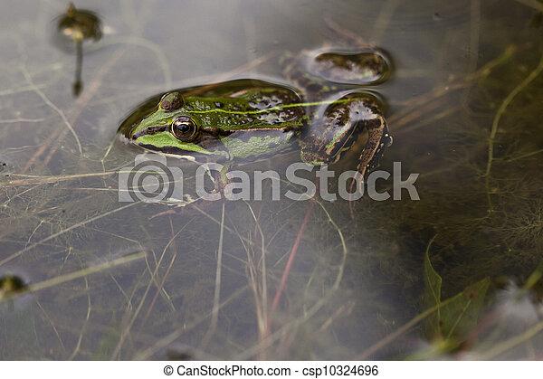 克隆青蛙的步骤