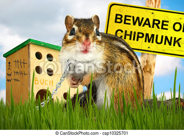 Ridiculous malicious chipmunk - csp10325701