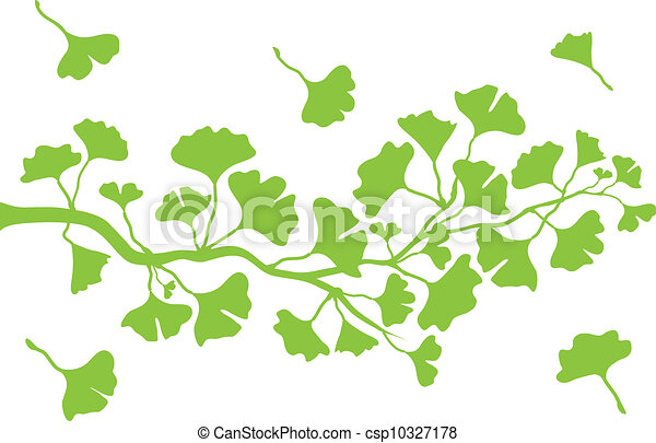 ginkgo branch with leaves, vector - csp10327178