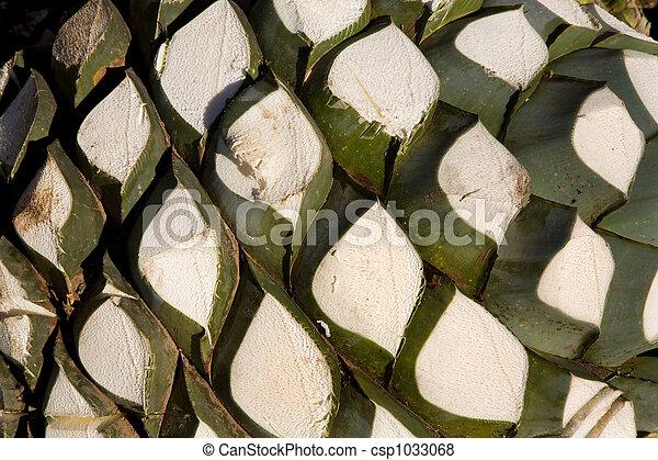 Images de agave fruit mexique agave fruit utilis produire csp1033068 recherchez - Agave du mexique ...