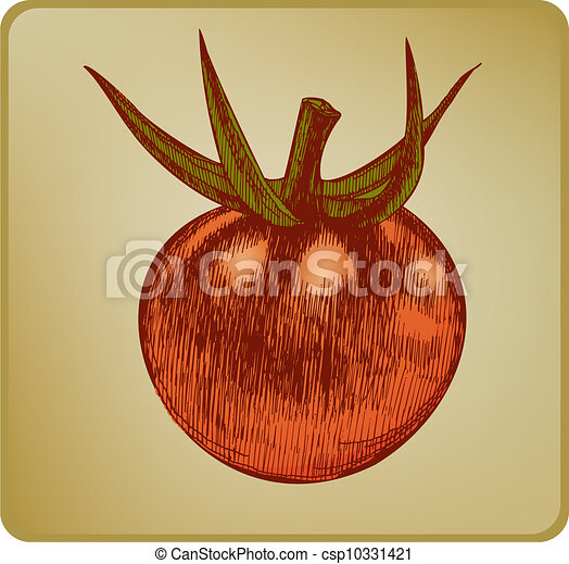 Vintage tomato, hand drawing. Vecto - csp10331421