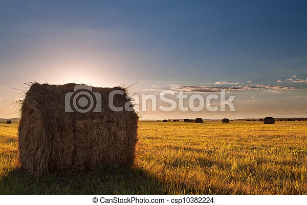 Bale field landscape - csp10382224